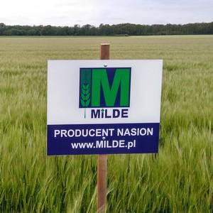 materiał siewny zbóż